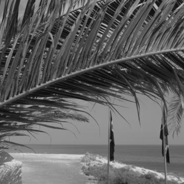 Tropical_07